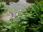 大東濕地生態教育園區:大東生態濕地園區(中正公園) 017.j