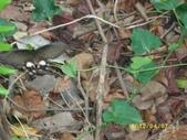 大東濕地生態教育園區:大鳳蝶~你發現了嗎?