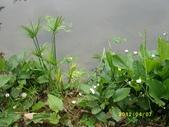 大東濕地生態教育園區:大東生態濕地園區(中正公園) 022.j