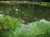 大東濕地生態教育園區:大東生態濕地園區(中正公園) 029.j