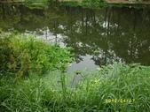 大東濕地生態教育園區:大東生態濕地園區(中正公園) 036.j