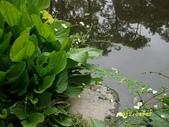 大東濕地生態教育園區:大東生態濕地園區(中正公園) 018.j