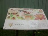 大樹舊鐵橋濕地:舊鐵橋濕地2012.3.11 073.jpg