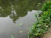 大東濕地生態教育園區:大東生態濕地園區(中正公園) 019.j