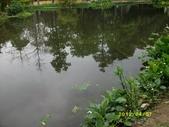 大東濕地生態教育園區:大東生態濕地園區(中正公園) 020.j