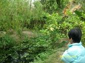 大東濕地生態教育園區:大東生態濕地園區(中正公園) 060.j