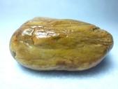 木化類:P1090365.JPG