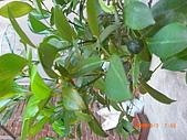 澆以信息密碼水之植物:CIMG0829.JPG