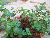 澆以信息密碼水之植物:CIMG0806.JPG