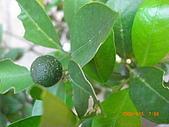 澆以信息密碼水之植物:CIMG0826.JPG