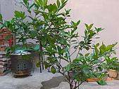 澆以信息密碼水之植物:CIMG0812.JPG