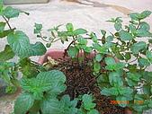澆以信息密碼水之植物:CIMG0807.JPG