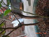 澆以信息密碼水之植物:CIMG0827.JPG