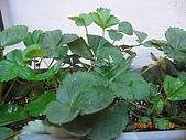 澆以信息密碼水之植物:CIMG0804.JPG