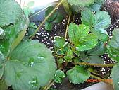 澆以信息密碼水之植物:CIMG0831.JPG