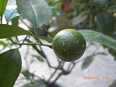 澆以信息密碼水之植物:CIMG0824.JPG