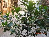 澆以信息密碼水之植物:CIMG0814.JPG
