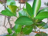 澆以信息密碼水之植物:CIMG0828.JPG