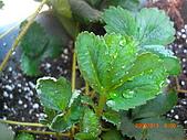澆以信息密碼水之植物:CIMG0832.JPG