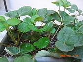 澆以信息密碼水之植物:CIMG0805.JPG