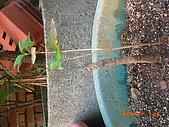 澆以信息密碼水之植物:CIMG0815.JPG