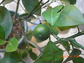 澆以信息密碼水之植物:CIMG0825.JPG