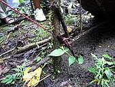 宜蘭九寮溪生態解說2008.11.01:看清楚了嗎