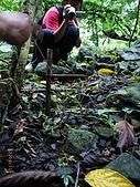 宜蘭九寮溪生態解說2008.11.01:抓竹雞的陷阱