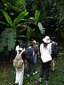 宜蘭九寮溪生態解說2008.11.01:芭蕉葉
