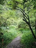宜蘭九寮溪生態解說2008.11.01:走過的路~很涼爽