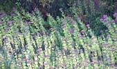 練習拍花:IMG_1906.JPG