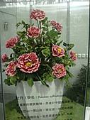 Flora exposition2:DSC03067.JPG
