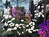 Flora exposition:DSC_1009.jpg