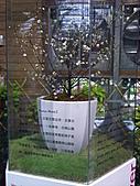 Flora exposition:DSC_0925.jpg