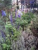 Flora exposition:DSC_0930.jpg