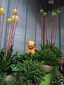 Flora exposition:DSC_0934.jpg