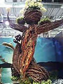 Flora exposition:DSC_1003.jpg