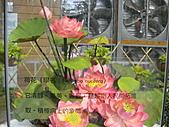 Flora exposition2:DSC03068.JPG
