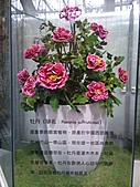 Flora exposition:DSC_0920.jpg