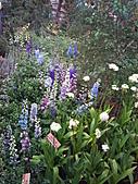 Flora exposition:DSC_0931.jpg