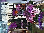 Flora exposition:DSC_1010.jpg