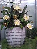 Flora exposition:DSC_0921.jpg