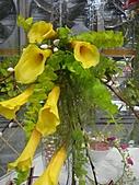 Flora exposition2:DSC03069.JPG