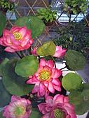 Flora exposition:DSC_0927.jpg