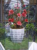 Flora exposition:DSC_0924.jpg