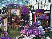 Flora exposition:DSC_1011.jpg
