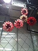 Flora exposition:DSC_0928.jpg