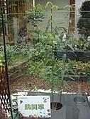 Flora exposition2:DSC03058.JPG