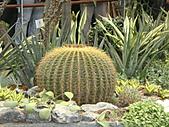Flora exposition2:DSC03075.JPG