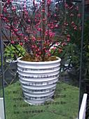 Flora exposition:DSC_0926.jpg